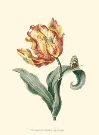 https://imgc.artprintimages.com/img/print/tulipa-v_u-l-f31u4m0.jpg?p=0