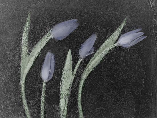 Tulipanes Azules-Moises Levy-Photographic Print