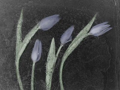 https://imgc.artprintimages.com/img/print/tulipanes-azules_u-l-q10pn2s0.jpg?p=0