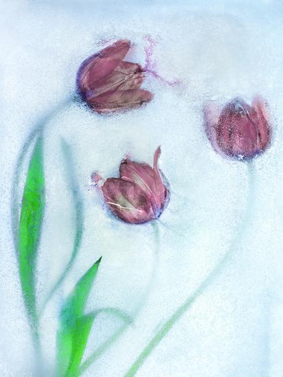 Tulipanes Rojos-Moises Levy-Photographic Print