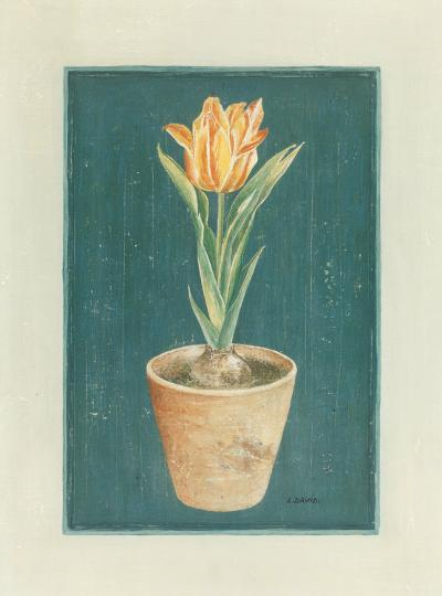 Tulipe Jaspé-Laurence David-Art Print