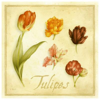 Tulipes-Vincent Perriol-Art Print