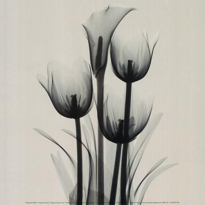 https://imgc.artprintimages.com/img/print/tulips-and-arum-lily_u-l-f3qdnu0.jpg?p=0