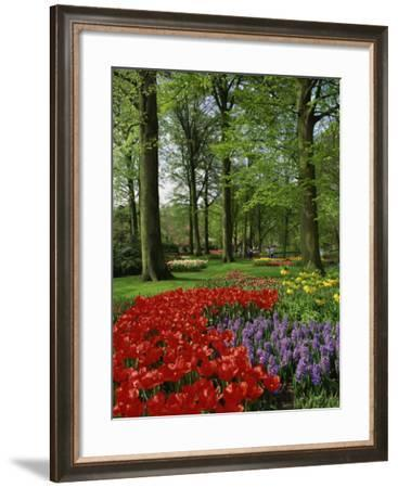 Tulips and Hyacinths in the Keukenhof Gardens at Lisse, the Netherlands, Europe-Groenendijk Peter-Framed Photographic Print
