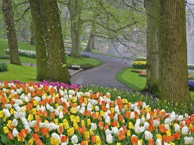 Tulips and Roadway, Keukenhof Gardens, Lisse, Netherlands-Adam Jones-Photographic Print