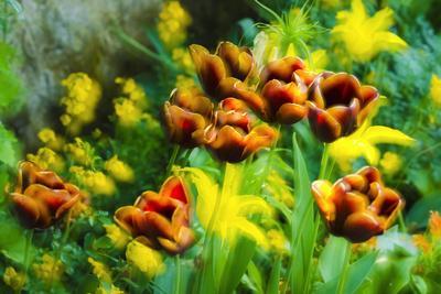 https://imgc.artprintimages.com/img/print/tulips-at-claude-monet-house-and-gardens-giverny-france_u-l-q13akt80.jpg?p=0