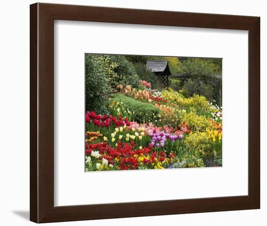 Tulips at Little Larford-Clive Nichols-Framed Photographic Print
