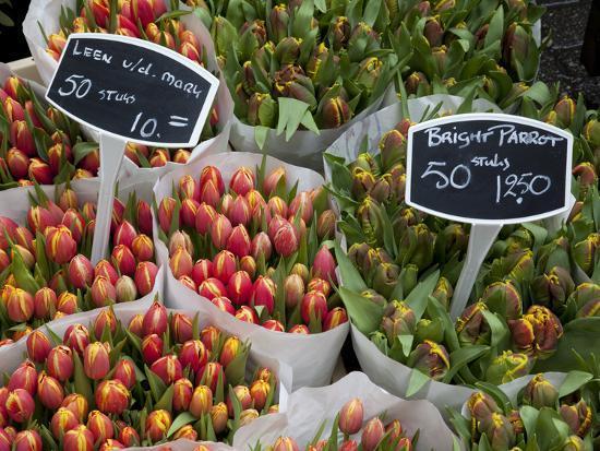 Tulips, Bloemenmarkt, Amsterdam, Holland, Europe-Frank Fell-Photographic Print