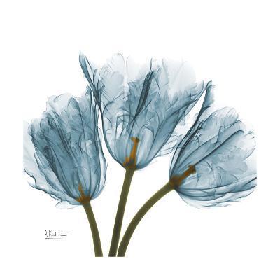 Tulips Blue-Albert Koetsier-Premium Giclee Print