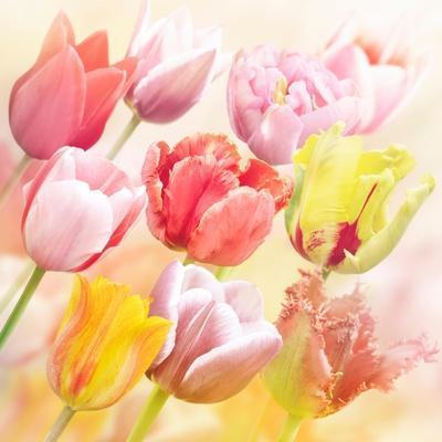 https://imgc.artprintimages.com/img/print/tulips-flowers-close-up-for_u-l-q13fle50.jpg?p=0