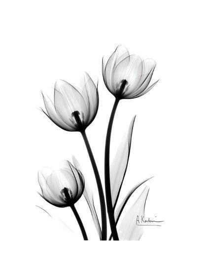Tulips High Contrast-Albert Koetsier-Art Print