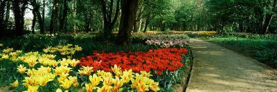 Tulips in a Garden, Springfields Garden, Lincolnshire, England--Photographic Print