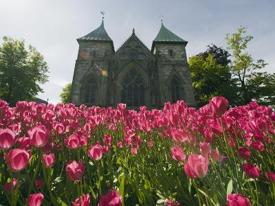 Tulips in Front of Stavanger Cathedral, Stavanger, Norway, Scandinavia, Europe-Christian Kober-Photographic Print