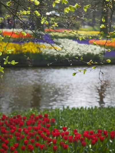 Tulips in Keukenhof Gardens, Amsterdam, Netherlands-Keren Su-Photographic Print