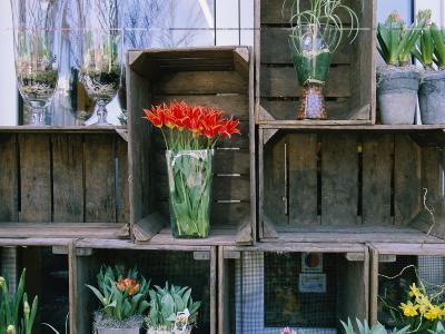 Tulips in Vases Atop Makeshift Wooden Crates-Sisse Brimberg-Photographic Print