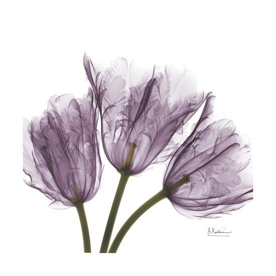 Tulips Lavender-Albert Koetsier-Premium Giclee Print