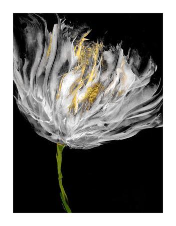 https://imgc.artprintimages.com/img/print/tulips-on-black-i_u-l-f9fbkj0.jpg?p=0