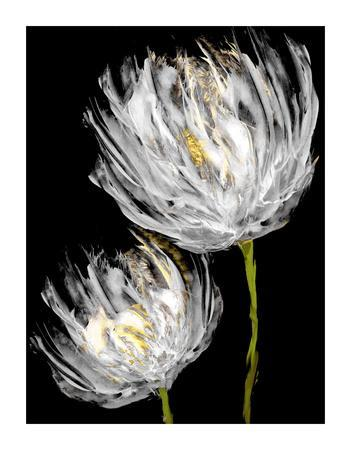 https://imgc.artprintimages.com/img/print/tulips-on-black-ii_u-l-f9fbku0.jpg?p=0