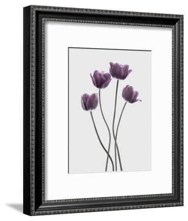 Tulips Purple-Design Fabrikken-Framed Photographic Print