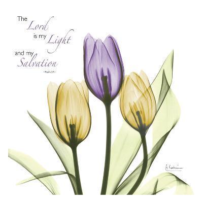 Tulips Salvation-Albert Koetsier-Art Print