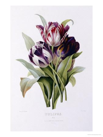 https://imgc.artprintimages.com/img/print/tulips_u-l-o670r0.jpg?p=0