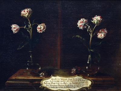 Tulips-Gasparo Lopez-Giclee Print