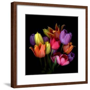 tulips-Magda Indigo-Framed Photographic Print