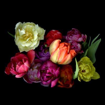 https://imgc.artprintimages.com/img/print/tulips_u-l-q1gxmwb0.jpg?p=0