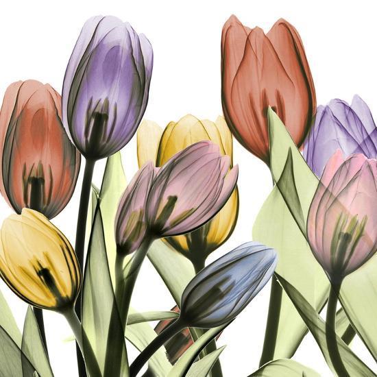 Tulipscape 2-Albert Koetsier-Art Print