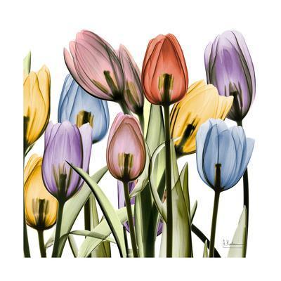 https://imgc.artprintimages.com/img/print/tulipscape_u-l-f8j35c0.jpg?p=0