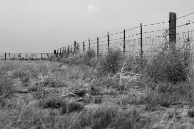 Tumbleweed Fences and Sheep-Amanda Lee Smith-Photographic Print