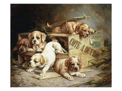 Tumbling Retriever Puppies-Frederico Olaria-Giclee Print