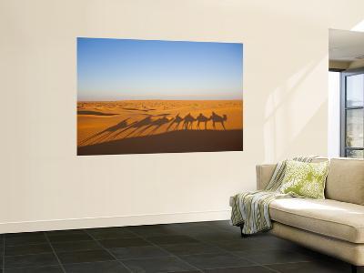 Tunisia, Ksour Area, Ksar Ghilane, Grand Erg Oriental Desert, Camel Caravan-Walter Bibikow-Wall Mural