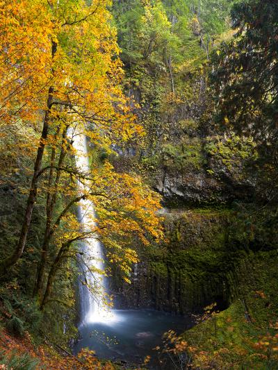 Tunnel Falls in a Fall Color Scene on Eagle Creek in the Columbia Gorge, Oregon, USA-Gary Luhm-Photographic Print