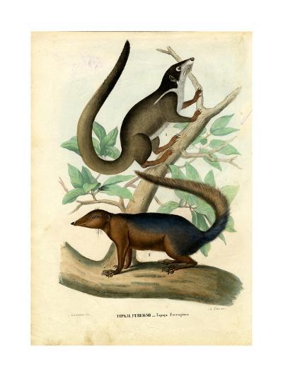 Tupaja, 1863-79-Raimundo Petraroja-Giclee Print