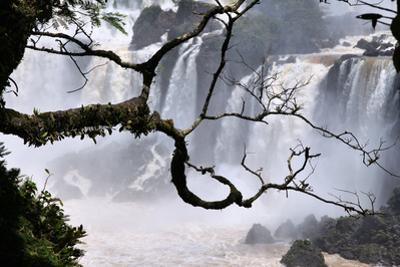 Iguazu Falls National Park by Tupungato
