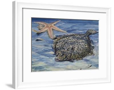 Turbot (Scophthalmus Maximus or Psetta Maxima), Scophthalmidae--Framed Giclee Print