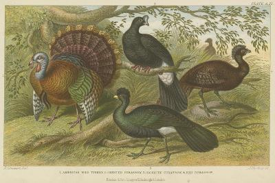 Turkey and Curassows--Giclee Print
