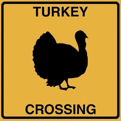 Turkey Crossing-Tina Lavoie-Giclee Print