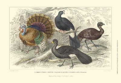 Turkey & Curassows-Julius Stewart-Art Print