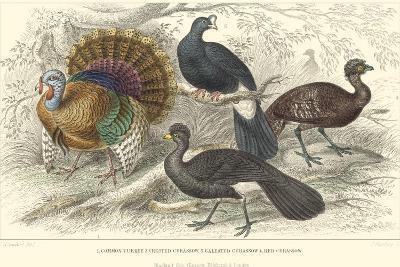 Turkey & Curassows-J. Stewart-Art Print