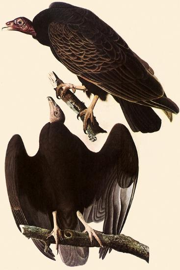 Turkey Vultures-John James Audubon-Giclee Print