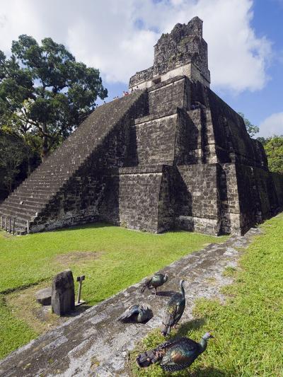 Turkeys at a Pyramid in the Mayan Ruins of Tikal, UNESCO World Heritage Site, Guatemala-Christian Kober-Photographic Print