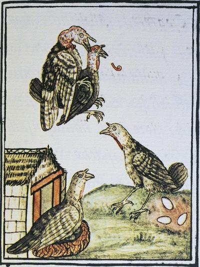 Turkeys Mating and Sitting on Eggs--Giclee Print