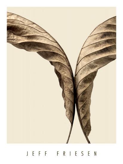 Turning Leaves II-Jeff Friesen-Art Print