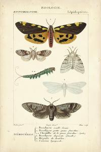 Antique Butterfly Study I by Turpin