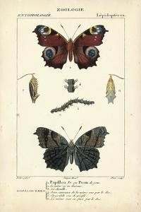 Antique Butterfly Study II by Turpin
