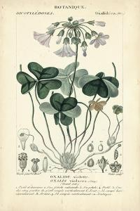 Botanique Study in Lavender I by Turpin