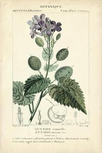 Botanique Study in Lavender III by Turpin