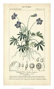 Botanique Study in Lavender IV by Turpin